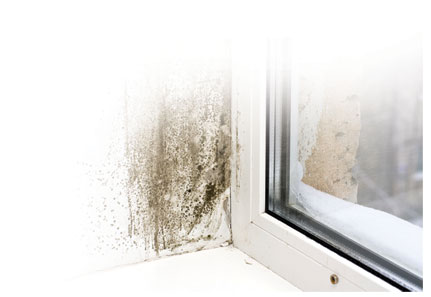First General Services (PA) Ltd  ~ Mold Remediation